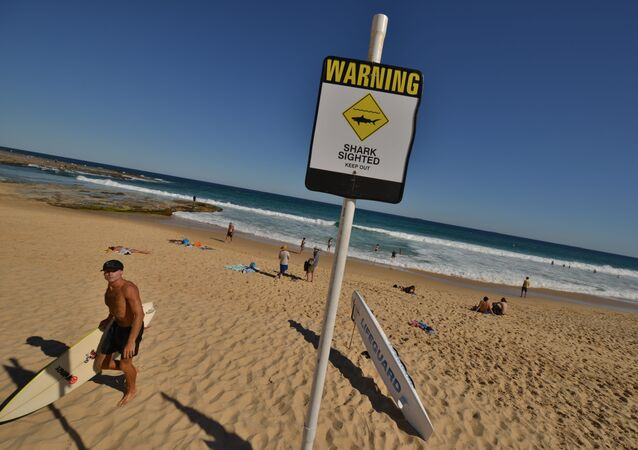 A surfer (L) comes in from the ocean after surfing despite shark warning signs posted on the beach in the northern New South Wales city of Newcastle on January 17, 2015