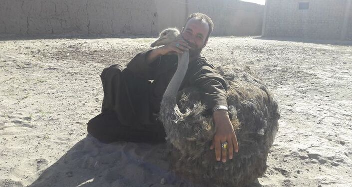 Life at the ostrich farm in Afghanistan