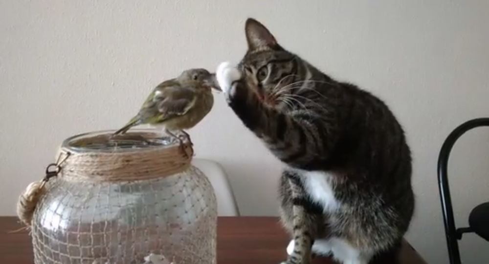 Easy Now! Cat Gently Pets Feathered Friend