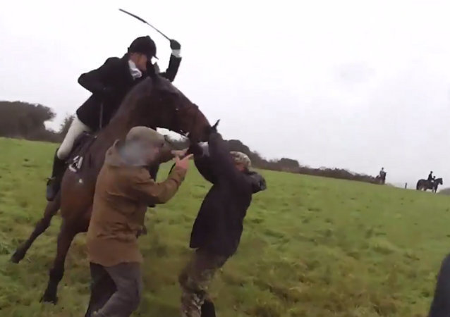 Fox hunter caught on film beating animal rights activists with horsewhip for grabbing onto horse reins
