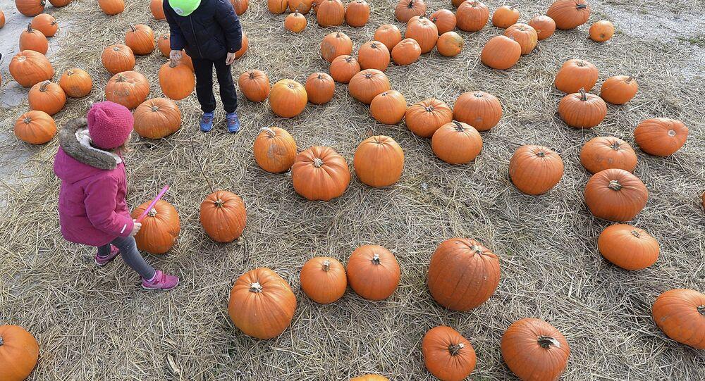 Children walk between pumpkins