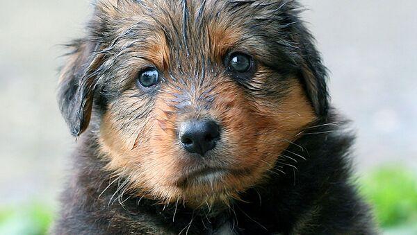 Wet puppy - Sputnik International