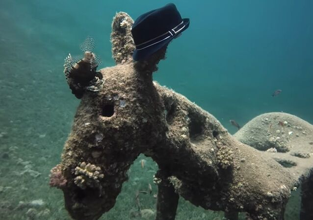 Diver Finds Donkey Statue Wearing Hat