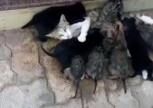 Cat Became a Mom to Eight Puppies