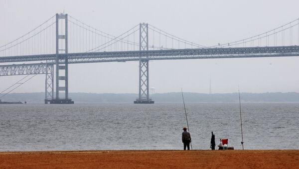 A man looks out over the Chesapeake Bay, with the Bay Bridge in the background, at Sandy Point State Park in Annapolis, Md., on Wednesday, May 12, 2010.  - Sputnik International