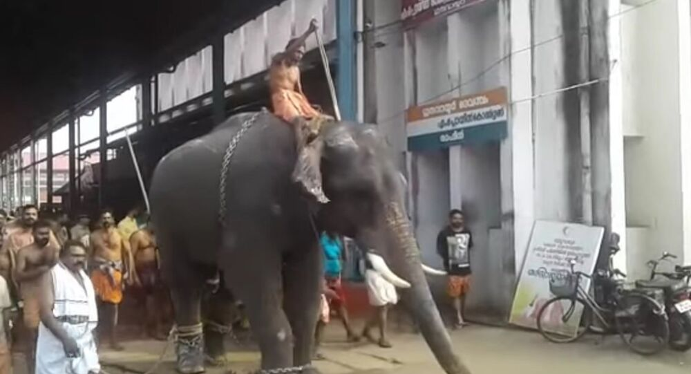 Elephants run amok inside Guruvayoor temple