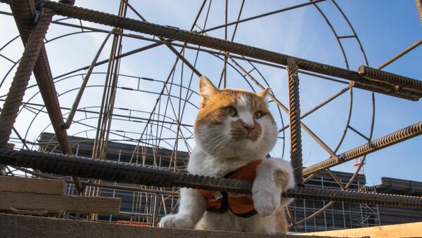 Mostik the cat - Sputnik International