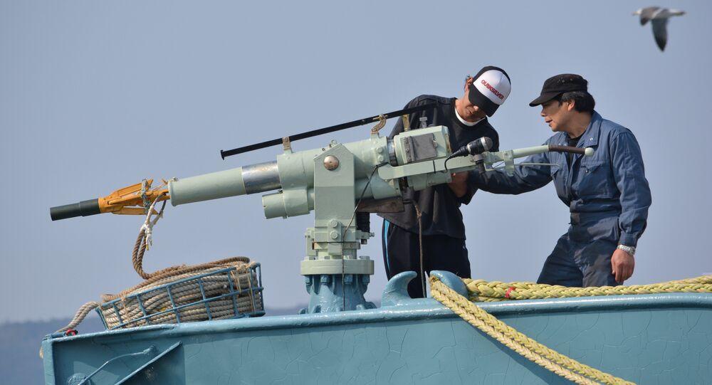 Crew of a whaling ship check a whaling gun or harpoon before departure at Ayukawa port in Ishinomaki City (File)
