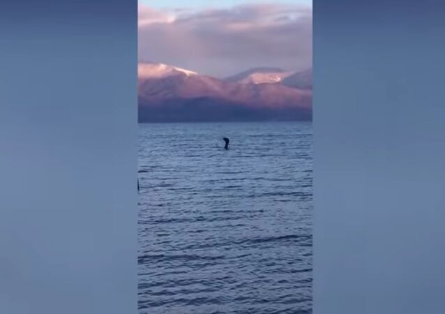 A video of what looked like a Loch Ness Monster-like creature has been posted on YouTube