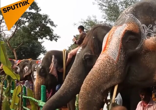 Rejuvenation And Recovery Center... For Elephants