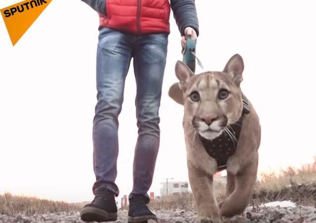 Couple Adopt Puma Named Messi