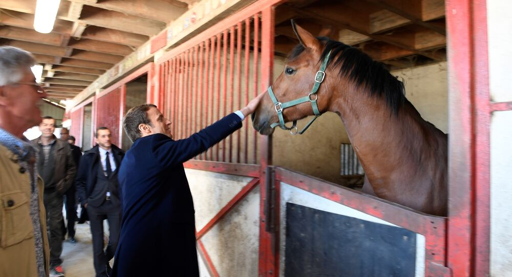 French centrist presidential candidate Emmanuel Macron pets a horse as he visits a farm in Usseau, central France, Saturday, April 29 , 2017