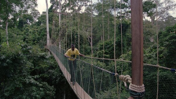 A footbridge over a river in the African country of Ghana - Sputnik International