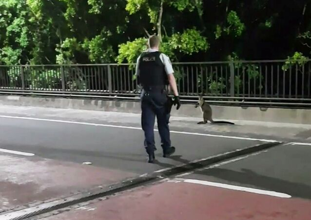A supplied video screenshot obtained January 16, 2018 of a policeman approaching a wallaby on the Sydney Harbour Bridge in Sydney, Australia