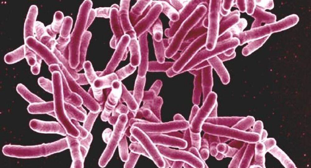 Mycobacterium tuberculosis bacteria