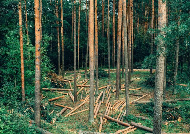 Felling forest