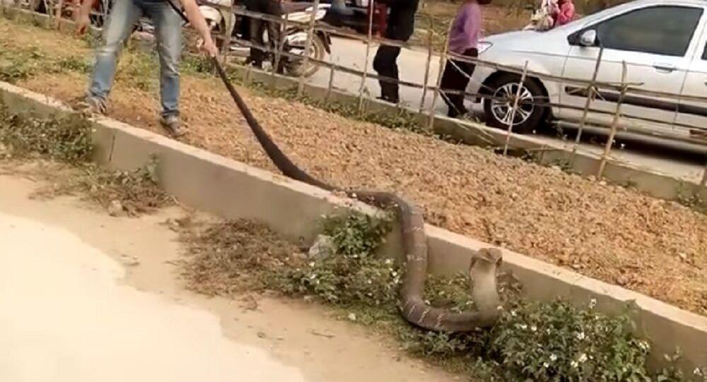 Giant Snake Causing Traffic