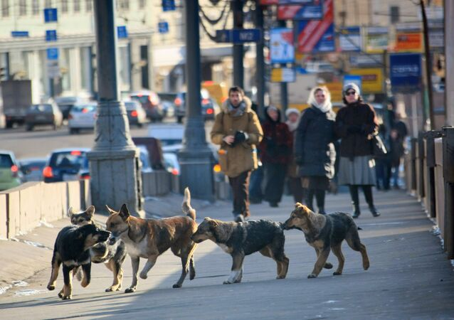 Stray dogs in Moscow. (File)
