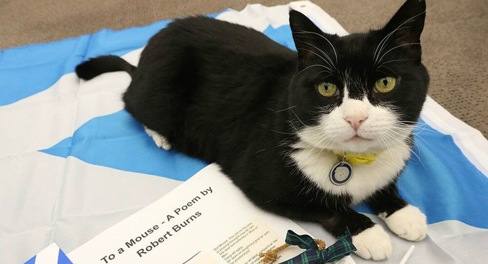 Palmerston the Cat