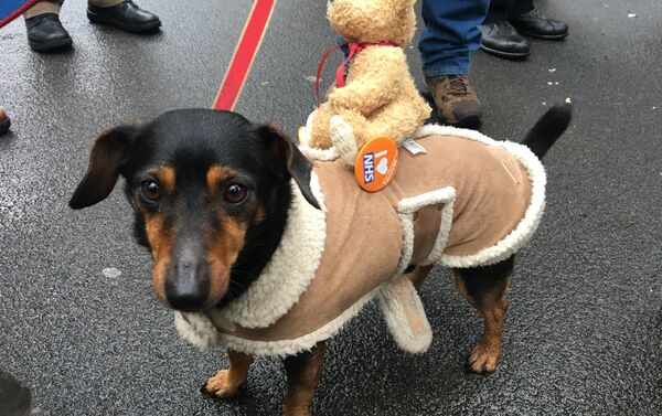A dog with a 'I love NHS' badge at the London march in support of the National Health Service - Sputnik International