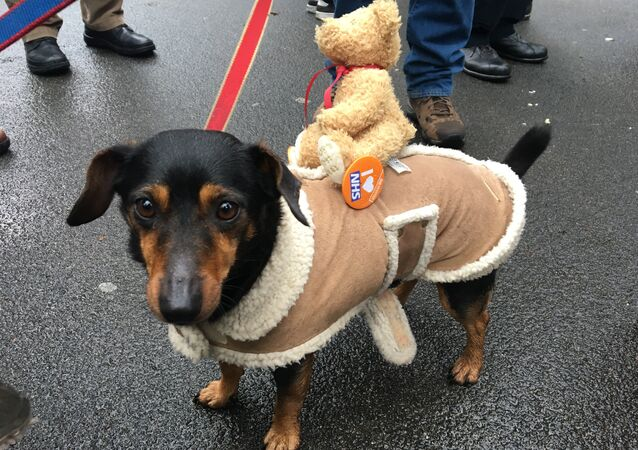 A dog with a 'I love NHS' badge at the London march in support of the National Health Service