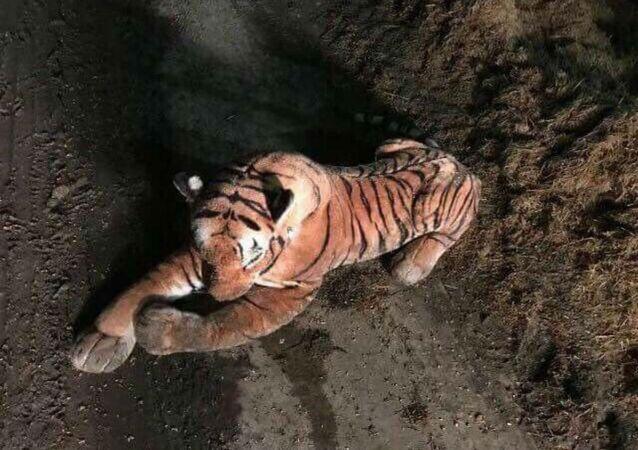 Tiger stuffed animal