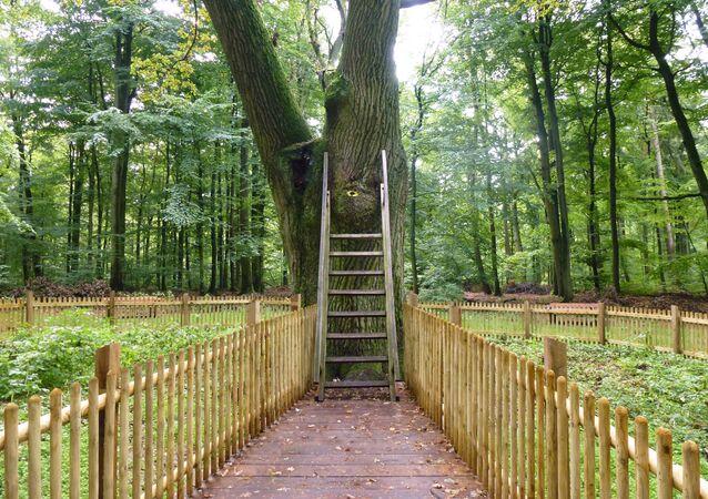 Bridegroom's Oak