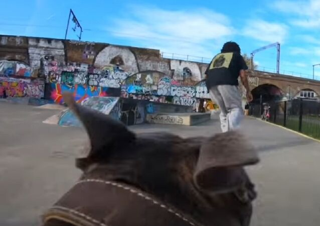Dog Films Local Skateboarders