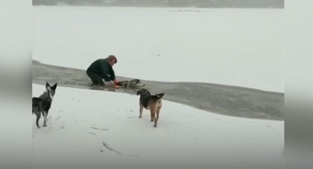 Dog Rescued From a Frozen Lake