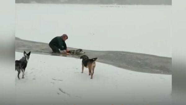 Dog Rescued From a Frozen Lake - Sputnik International