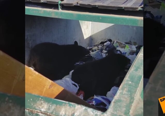 Bear Cubs Found In Dumpster