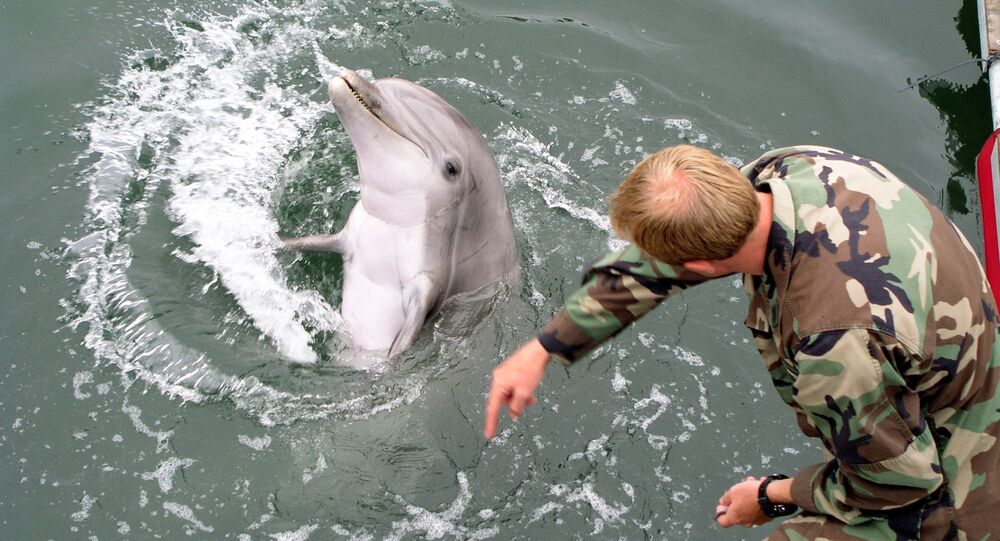 Navy marine shows how a trained dolphin reacts to different hand gestures