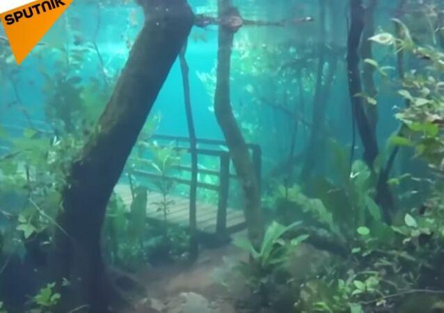 Underwater Forest in Brazil