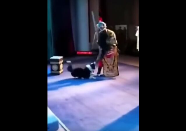 Dog wants to play during a performance