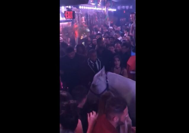 Horse in South Beach nightclub gets spooked, causes panic