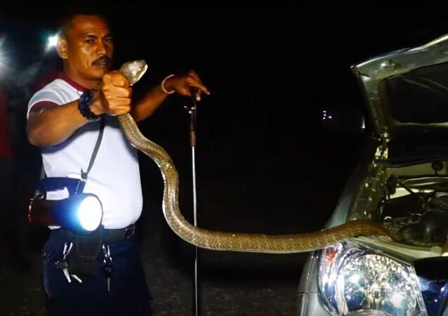 Massive Snake Caught and Relocated || ViralHog