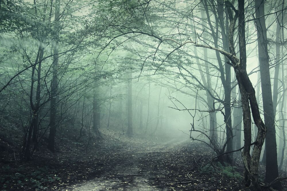 Mystic and Bizarre Forests Around the World