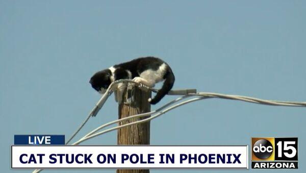 Cat stuck on pole in Phoenix - Sputnik International