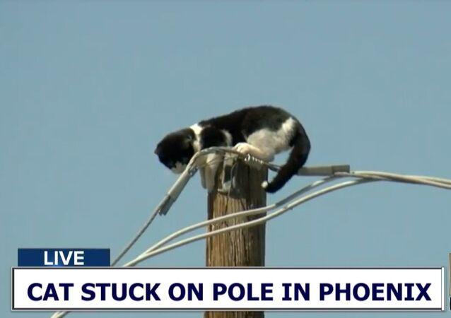 Cat stuck on pole in Phoenix