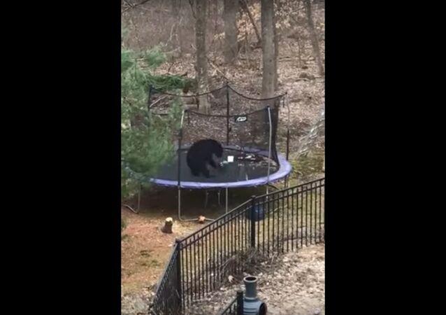 Bear Plays on Trampoline