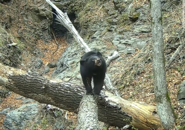 Bear and camera trap in Leopard Land