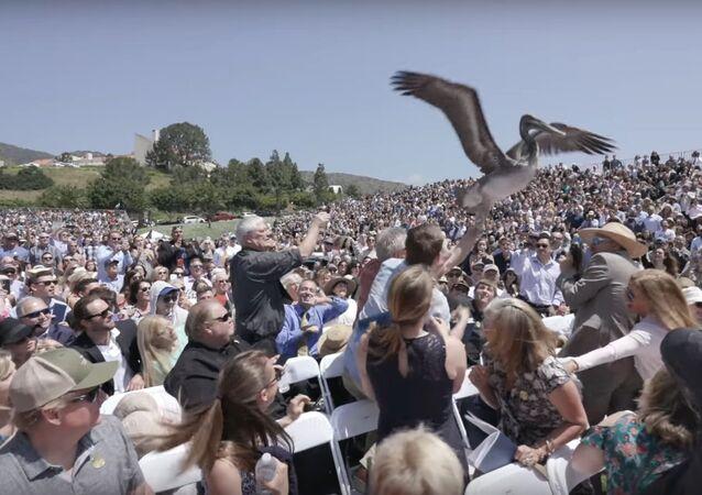 Pelicans crash Pepperdine University graduation