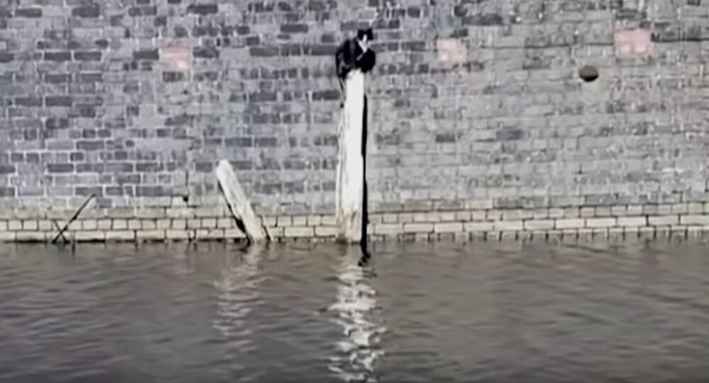 Passerby Rescues a Cat From Watery Trap