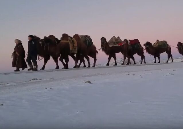 Mongolia: 12,000km Camel Camel Caravan to Share Mongolian Nomadic Culture With the World