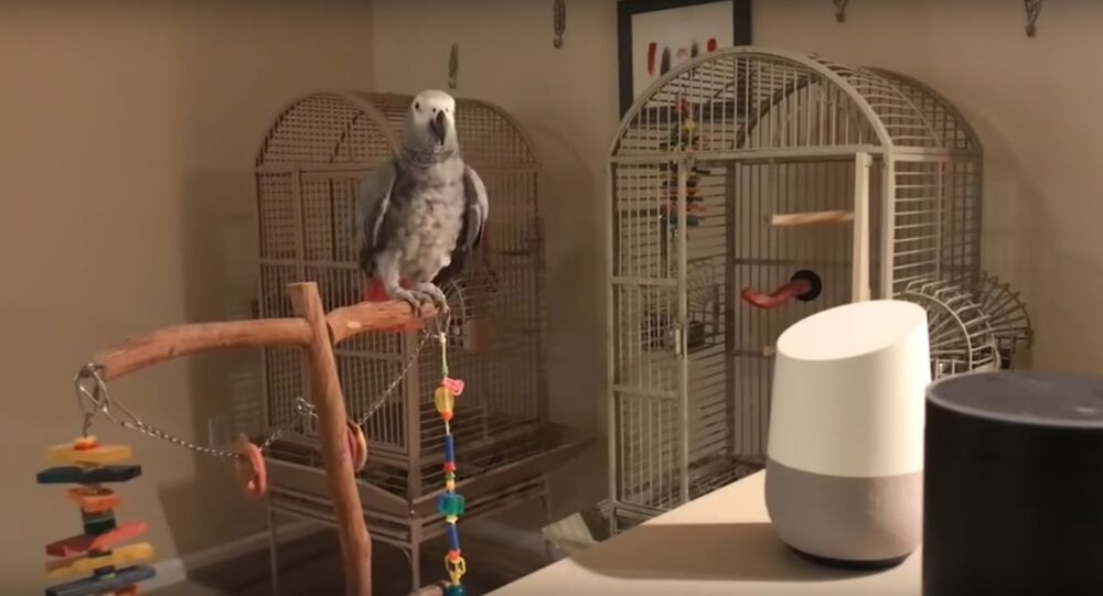 Parrot Talks to Virtual Assistant