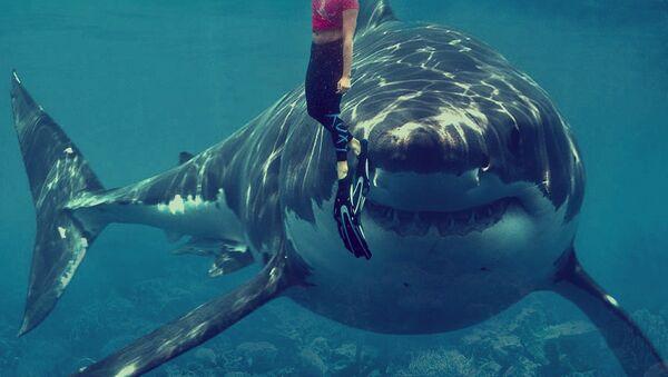 Shark - Sputnik International