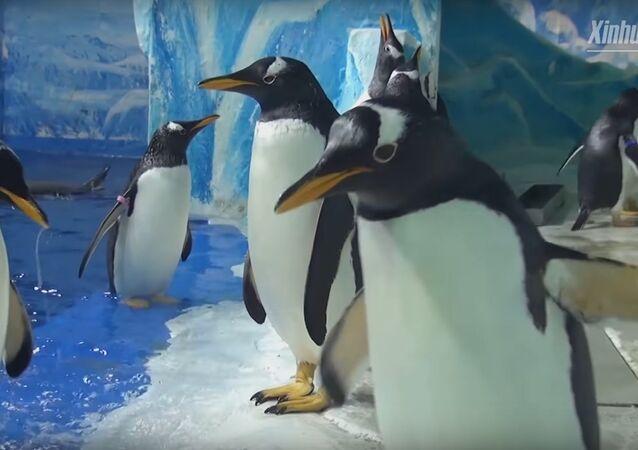 Penguins enjoy Kungfu study in Harbin Polarland in NE China