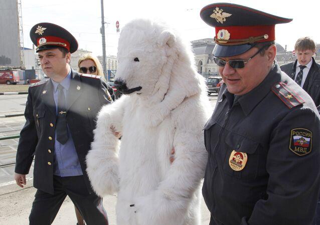 Police officers arrests a polar bear (File)