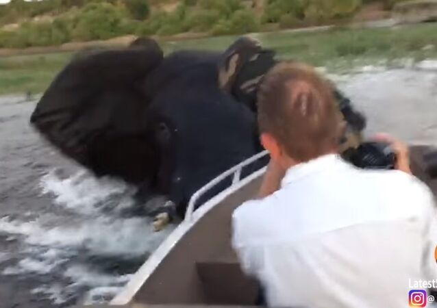 Elephant Charges & Hits Boat