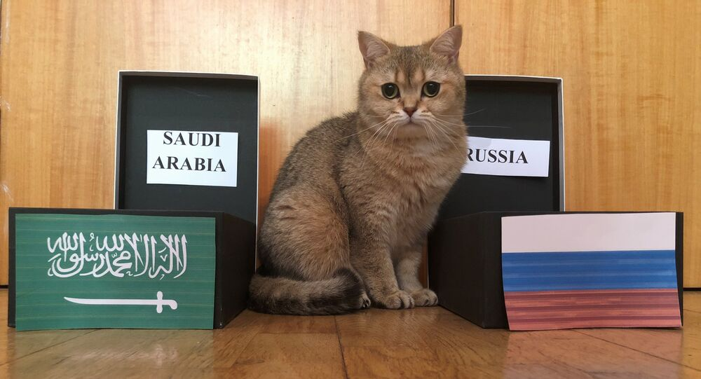 Sushi, the cat predicts World Cup game outcomes